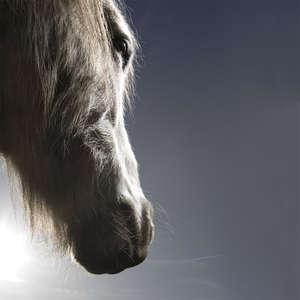 _Eriskay-Pony