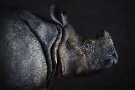 Rhino-Portrait